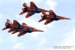russian swifts-image05.jpg